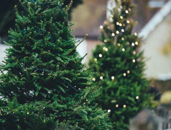 Christmas Trees Dorchester, MA
